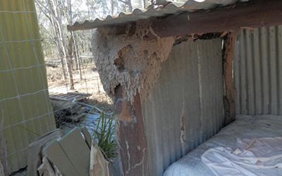 termite3