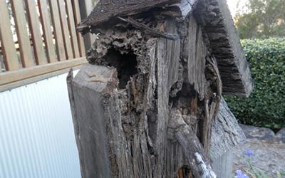 termite4